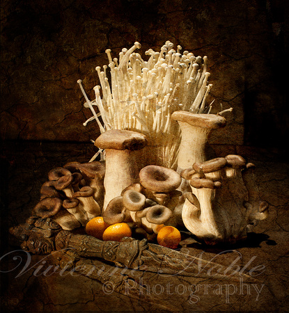 """Feast Of Mushrooms 2"""